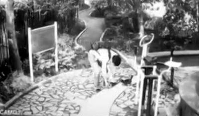 上海男子用猫粮诱出小猫后残忍摔砸  还是家庭教师呢
