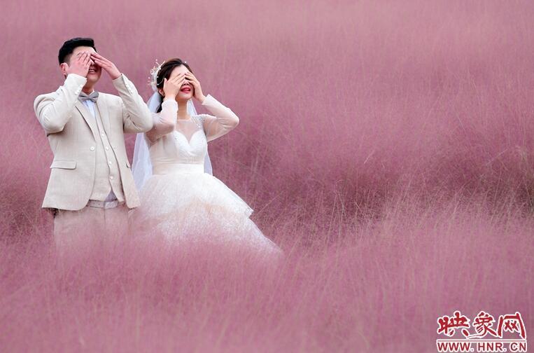 2500平方米的网红草变身拍照圣地,满目粉红色很养眼!