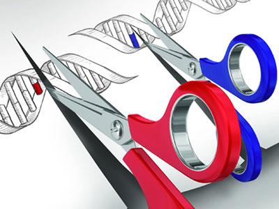 基因编辑监管并不是一片空白