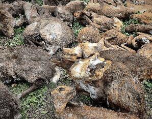 四川男子家藏十吨野味获刑 价值41万元判3年