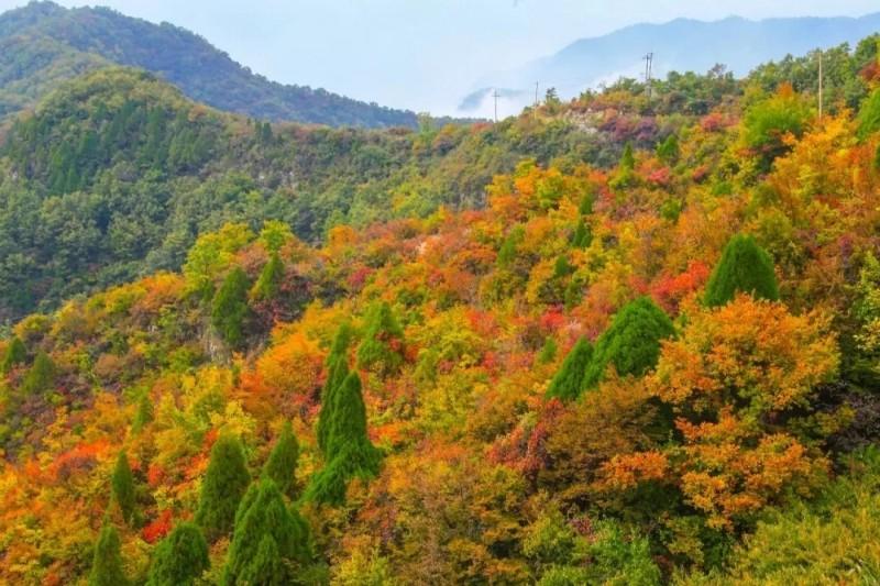 赏红叶,观美景, 趁着深秋快出发!别错过他们的美!