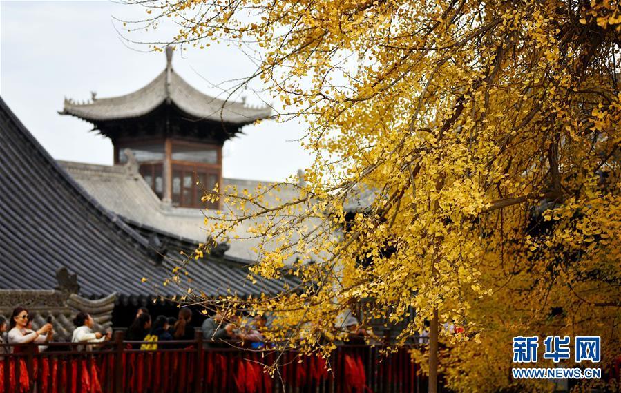 罗汉洞村古观音禅寺:千年银杏立古刹 叶随风雨满地金