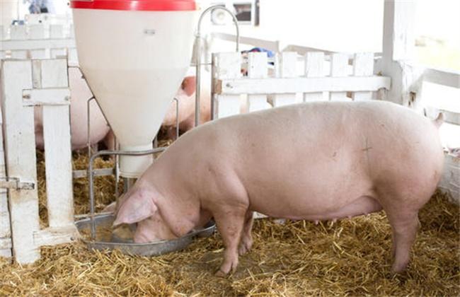 提高 猪饲料利用率 措施