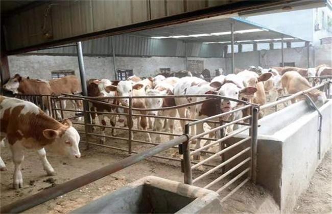 肥牛养殖 存在的问题