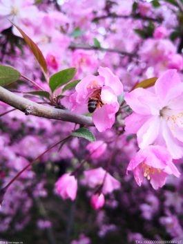 春暖花开的说说心情 在轮回中彰显的欣欣向暖的生命力