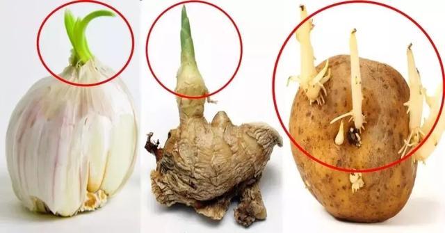 土豆发芽了还能吃吗?发芽的大蒜能吃吗?