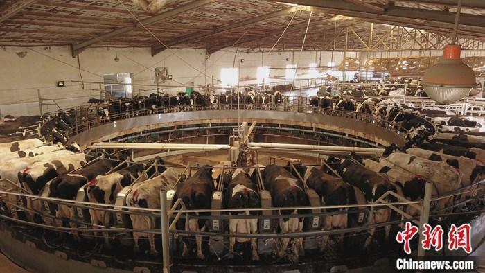 中国奶业想要更国际范儿 需在质量上下功夫