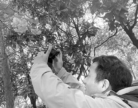 浙江援鄂医护人员再回武汉 赴一场浪漫的樱花之约