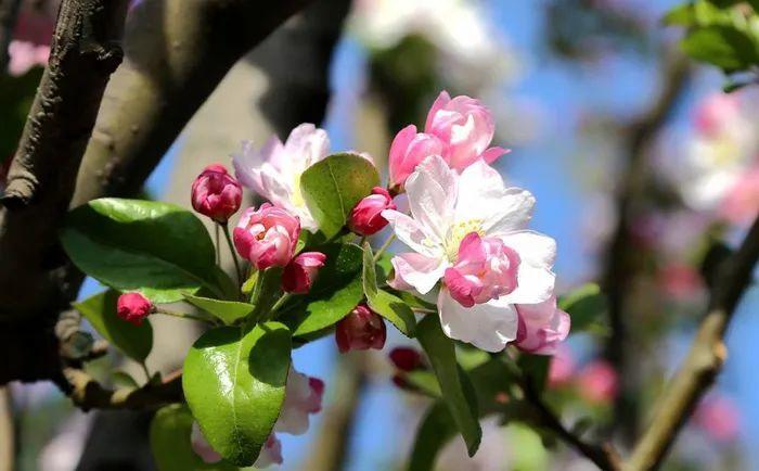 春风春暖春意 来扬州赴一场春天的约会