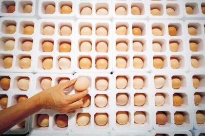 """南阳版""""中国合伙人"""" 三个男人3年卖出9亿多枚鸡蛋"""