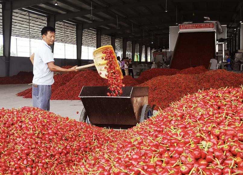 贵州:五大优势 助推辣椒产业高质量发展